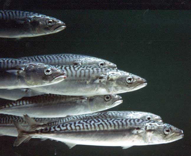 benefits-of-fish-oil-709630