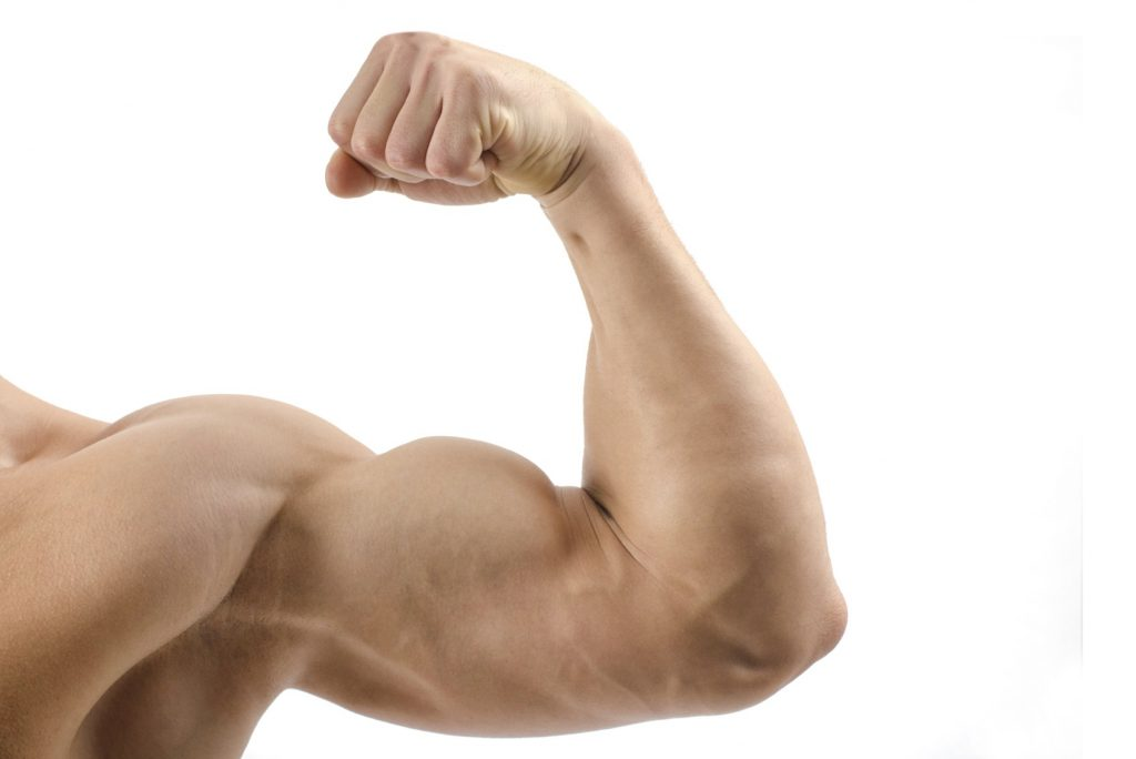 increased-protein-intake-could-boost-metabolism-and-lean-muscle-mass
